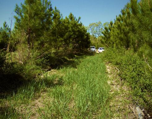 switchgrass_planting