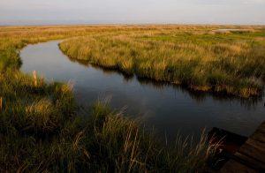 Tangier Island,  Chesapeake Bay